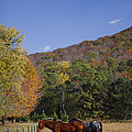 Horses And Autumn Landscape by Kathy Clark
