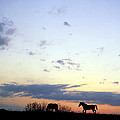Horses and sky