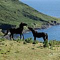 Horses By The Sea by Rob Hawkins