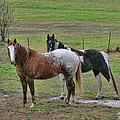 Horses by Ericamaxine Price