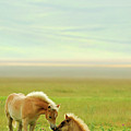 Horses Foals In Field by Vittorio Ricci - Italy
