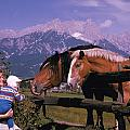 Horses In Switzerland by Carl Purcell