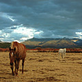 Horses In Winter Landscape  Truchas, New Mexico by Mary Hockenbery