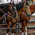Horses by Michelle Frizzell-Thompson