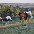 Horses On The Range by Annette Van Buren