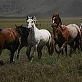 Horses Run Free by Michael Elam