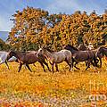 Horses Running Free by Susan Candelario
