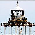 Horseshoe Reef Lighthouse by Rose Santuci-Sofranko