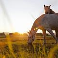 Hose Grazing In Rural Field by Stefanie Grewel