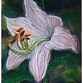 Hosta Bloom by Thomas Dreesen