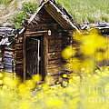 House Behind Yellow Flowers by Heiko Koehrer-Wagner