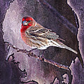 House Finch Looking At Me by J Larry Walker