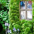 House With Moss Walls by Simon Bratt Photography LRPS