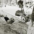 Hue Street Life by Shaun Higson