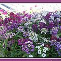 Hues Of Purple Phlox by Debbie Portwood