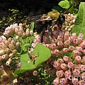 Huge Bumble Bee by Donna Brown