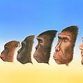 Human Evolution, Artwork by Richard Bizley