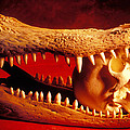 Human Skull  Alligator Skull by Garry Gay