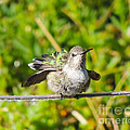 Hummer Takes A Shower by L J Oakes
