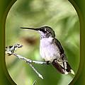 Hummingbird - Gold And Green by Travis Truelove