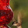Hummingbird At The Feeder by Keith Allen