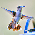 Hummingbird At The Feeder by Shirley Tinkham