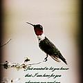 Hummingbird - Cards by Travis Truelove
