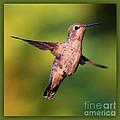 Hummingbird Hello by Carol Groenen