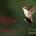 Hummingbird Holiday Card by Sabrina L Ryan