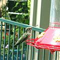 Hummingbird II by Madelyn May