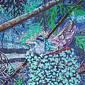 Hummingbird by Jim Barber Hove
