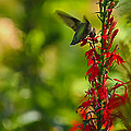 Hummingbird by Linda Tiepelman