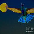 Hummingbird Moon by Al Bourassa