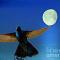 Hummingbird Moon II by Al Bourassa