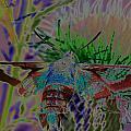 Hummingbird Moth by Rick Rauzi