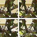 Hummingbird Mother Feeding Her Two Babies by Xueling Zou