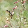 Hummingbird Nourishment by Susan Gary