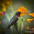 Hummingbird On Guard - Artist Cris Hayes by Cris Hayes