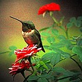 Hummingbird On The Rose by Carrie OBrien Sibley