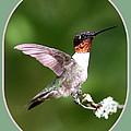 Hummingbird Photo - Light Green by Travis Truelove