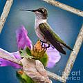 Hummingbird Picture Pretty by Betty LaRue