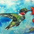 Hummingbird Sips by Gloria Avner