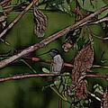 Hummingbird Waiting For Dinner by Ericamaxine Price