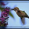 Hummingbird With Blue Border - Digital Painting by Carol Groenen