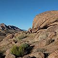 Humping Rock by Lorraine Devon Wilke