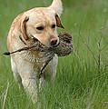 Hunting Dog by Waldek Dabrowski