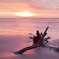 Hunting Island South Carolina by Bill Swindaman