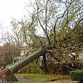 Hurricane Sandy I by Jessica Cruz
