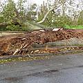 Hurricane Sandy II by Jessica Cruz