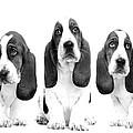 Hush Puppies by Sumit Mehndiratta
